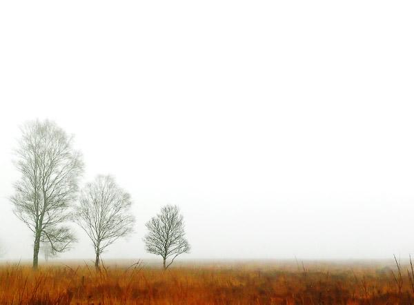 Vlammen in de mist